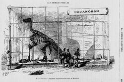Iguanodon,1883