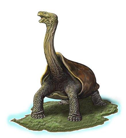 Маскаренские гигантские черепахи