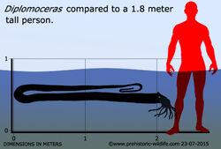 Diplomoceras размеры.jpg