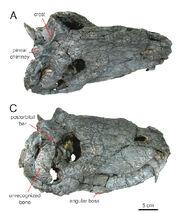 Pampas-skull.jpg