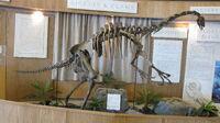 Nothronychus-skelet-1