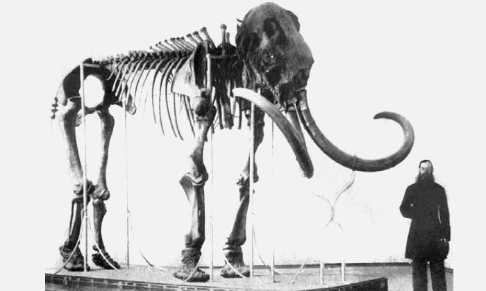 Ленский мамонт