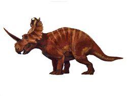 Coronosaurus cb00