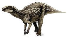 Fukuisaurus-m
