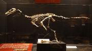 Gobivenator fossils.jpg