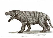 Hyaenodon gigas by teratophoneus-d4n0hrm.jpg