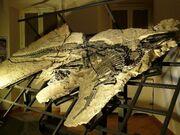 Tethyshadros fossil.jpg