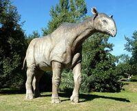 Paraceratherium8