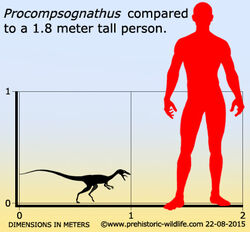 Procompsognathus-size.jpg