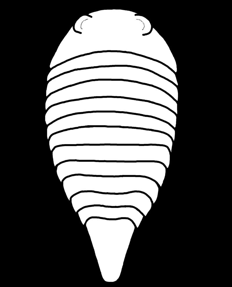 Палеомер