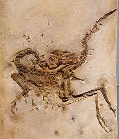 512px-Compsognathus longipes cast 3