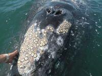 Усоногие рачки на ките