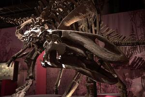 Гилмореозавр скелет.jpg