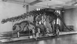 Postcard of Brontosaurus for 1933 AMNH.jpg