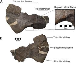 Yehuecauhceratops-2