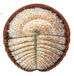 Археаспин
