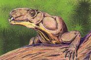 PhthinosuchusDB1