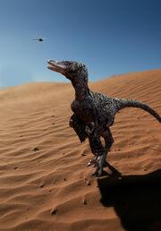 Raptor 08.jpg