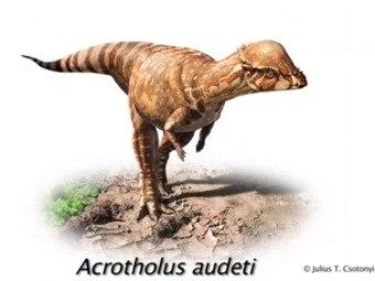 Акротолус