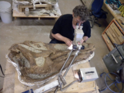 Edmontosaurus skull 03.png