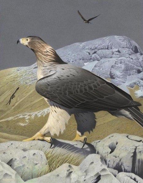 Орёл Хааста