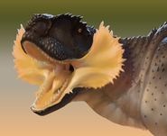 Rugops- frill cheeked-portriat 01