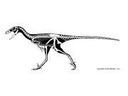 Stenonychosaurus sk.jpg