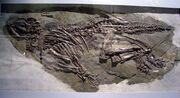 Jinzhousaurus fossil.jpg