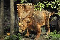 1024px-Vagaceratops model