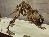 Titanophoneus potens (fossil).jpg