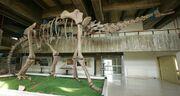 Atlasaurus skeleton.jpg