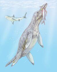 Polyptychodon interr2DB.jpg