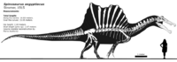 Spinosaurus aegyptiacus is that rendered by Henrique Paes