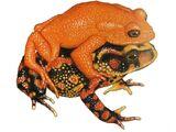 Золотая жаба