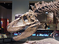 275px-Daspletosaurus FMNH