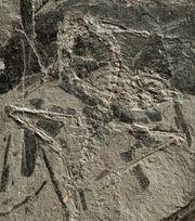 Лангобардизавр7.jpg