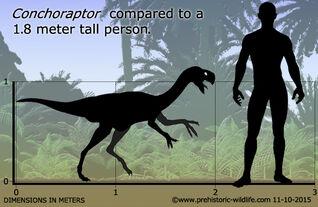 Conchoraptor-size.jpg