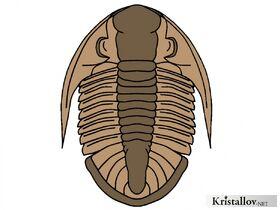 Батиуроиды
