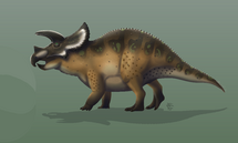 Трицератопс прорсус