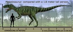 Megalosaurus-size.jpg