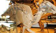 Bactrosaurus fossil.jpg