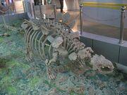Crichtonpelta fossil.jpg