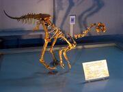 Ajancingenia fossil.jpg