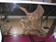 Lambeosaurus skull 01.jpg
