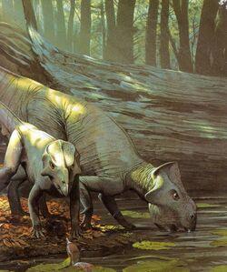 Leptoceratops 2dcd.jpg