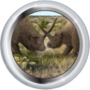 Единорог сибирский