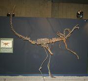 Harpymimus fossil 01.jpg