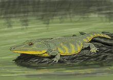800px-Mastodonsaurus DB.jpg
