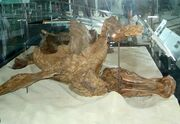 Edmontosaurus Trachodon 03.jpg