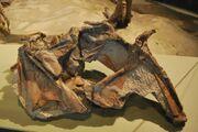 Cryolophosaurus skull.jpg